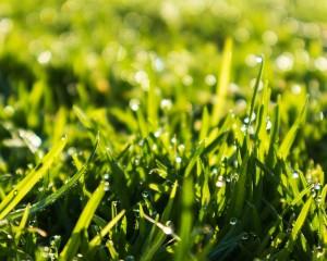 Beautiful spring grass.